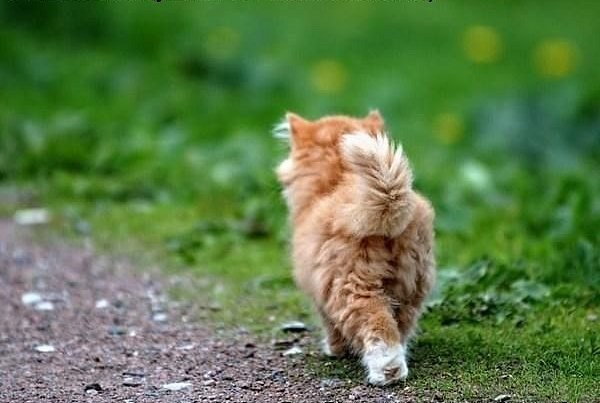 Почему коты возвращаются домой