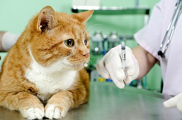 Дегельминтизация кошек