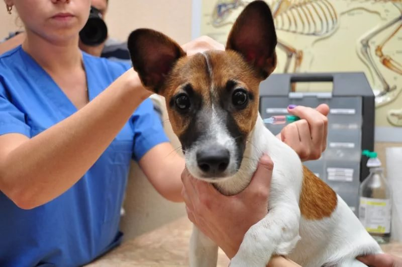 прививки собакам в Ростове-на-Дону