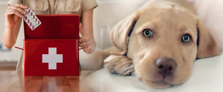 Ветеринарная аптечка для собаки