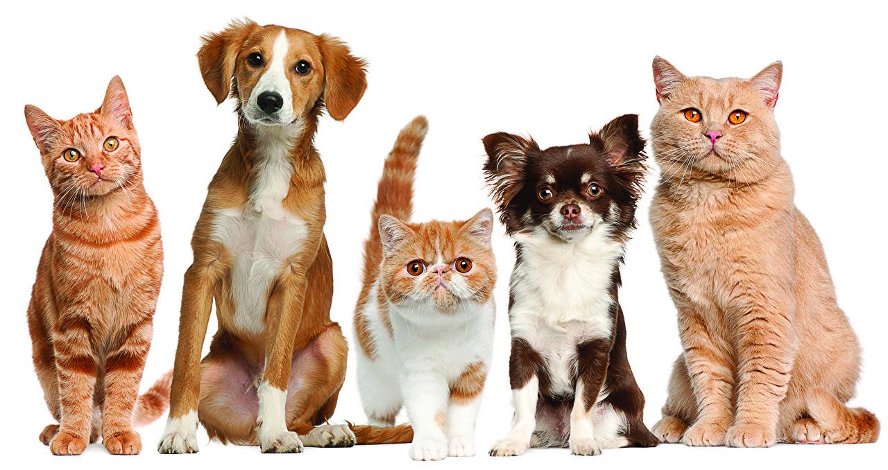 Важность стерилизации и кастрации кошек и собак