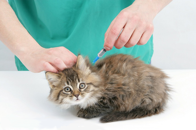 прививки домашним кошкам в Ростове, вакцинация кошек на дому