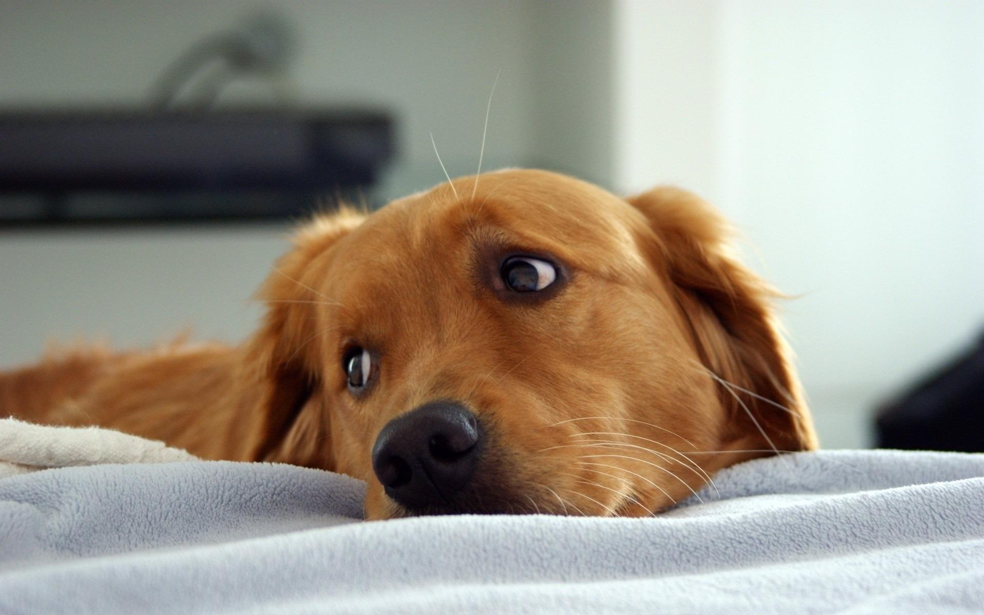 киста у собаки