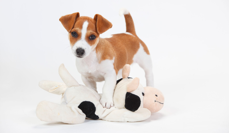 профилактика болезней у собак