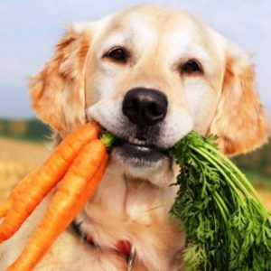 авитаминоз у собак: причины и лечение