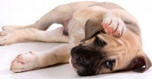столбняк у собак