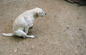 Собака ездит попой по полу