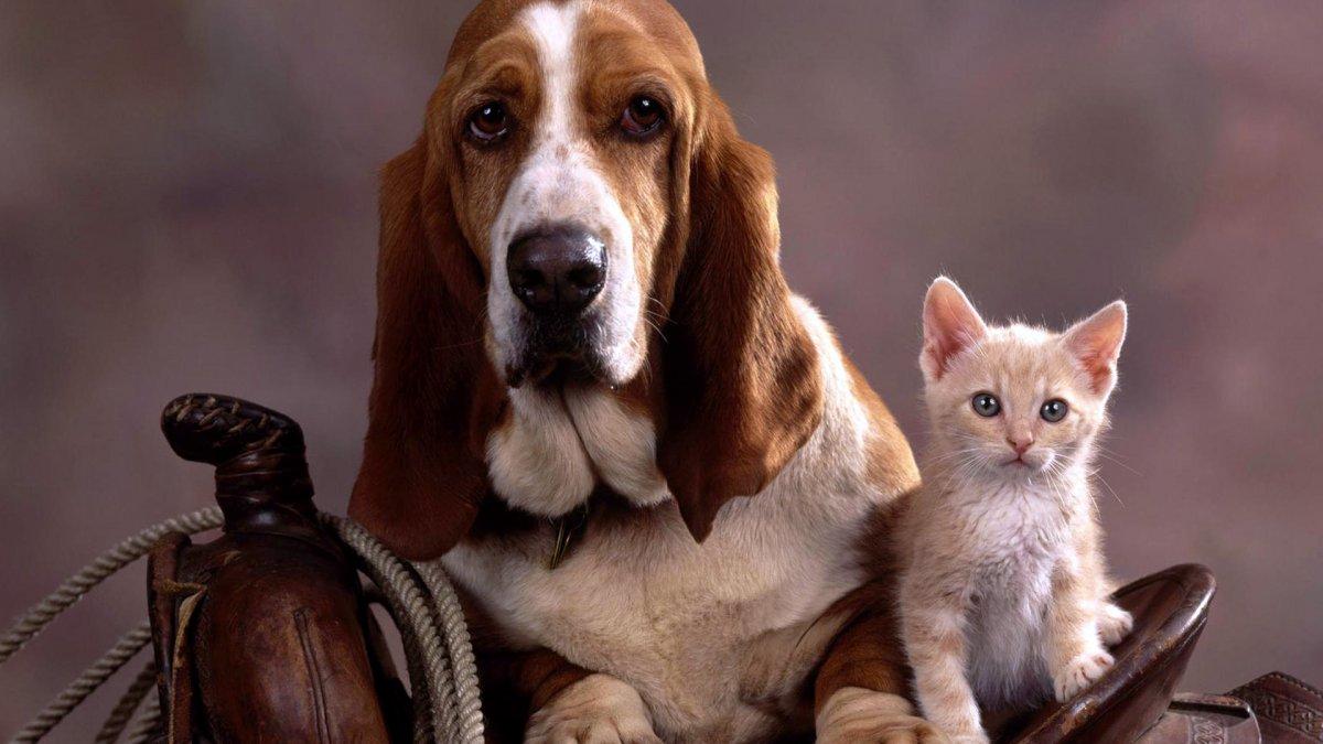 чистка ушей у кошек и собак